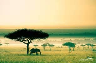 Africa, Kenya, Savannah, Elephant HD Wallpapers / Desktop ...