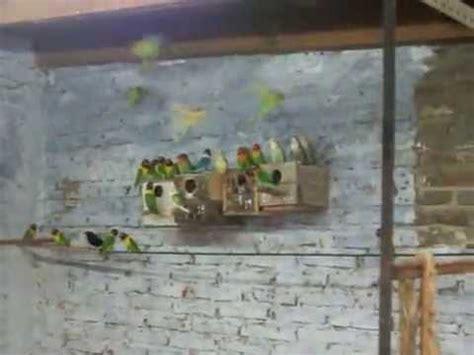 AGAPORNIS criadero colonial.MOV   YouTube