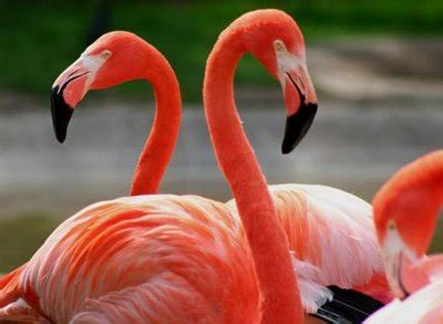agosto | 2010 | Flamencos rosas
