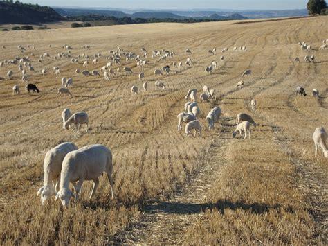 AGRAL   Agral
