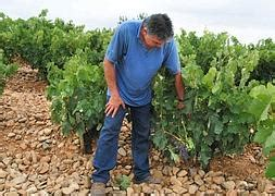 Agricultura abonará 11,2 millones de las ayudas de la PAC ...