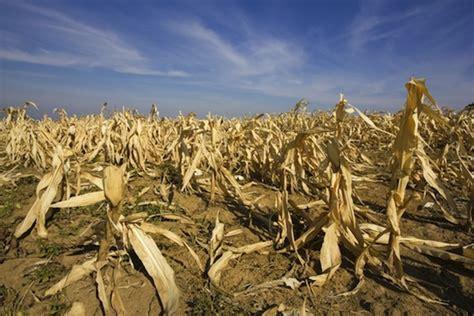 AGRICULTURA CERO: EL CALENTAMIENTO GLOBAL EN LA AGRICULTURA