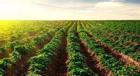 Agricultura Comercial: lo que aún no sabes sobre las ...