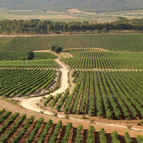 Agricultura concede ayudas para impulsar proyectos de ...