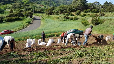 Agricultura de Canarias abona 3,3 millones a los ...