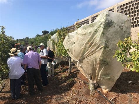 Agricultura de Canarias impulsa ayudas valoradas en 11,3 ...