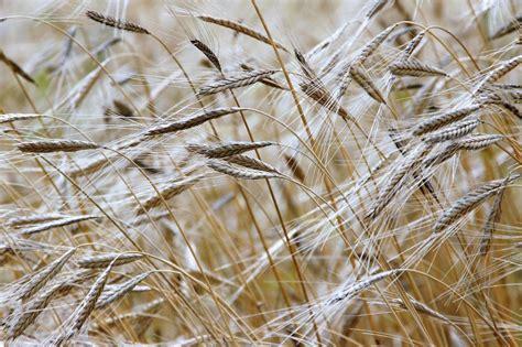 Agricultura de secano | Qué es, definición, ventajas ...