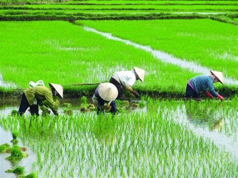 Agricultura de Subsistencia: Definición, Características ...