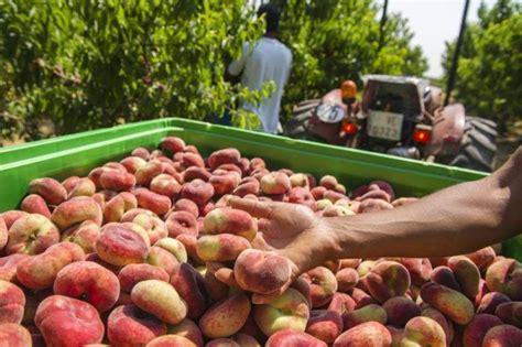 Agricultura destina 1,8 millones a las ayudas para ...