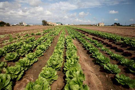 Agricultura destina 450.000 euros a proyectos innovadores ...