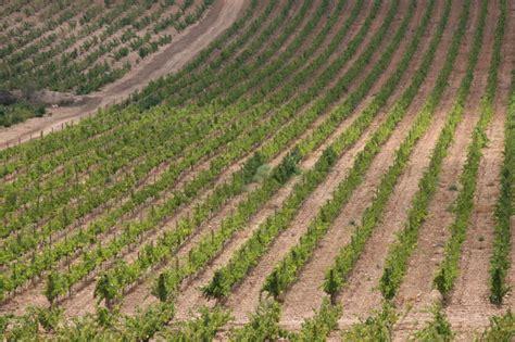 Agricultura destina 940.000 euros a la incorporación de ...