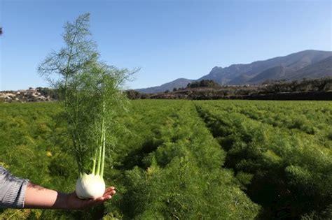 Agricultura destina más de 500.000€ a ayudas para ...