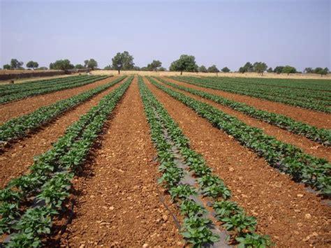 Agricultura.  El Govern recuerda a los agricultores que su ...