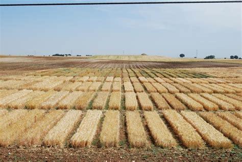 Agricultura ha concedido 364 autorizaciones para descaste ...