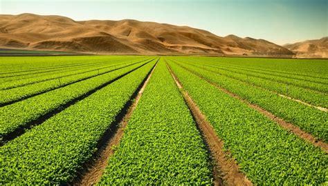 Agricultura Intensiva: Definición, Características ...