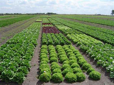 Agricultura Organica: LA IMPORTANCIA DE LA AGRICULTURA ...