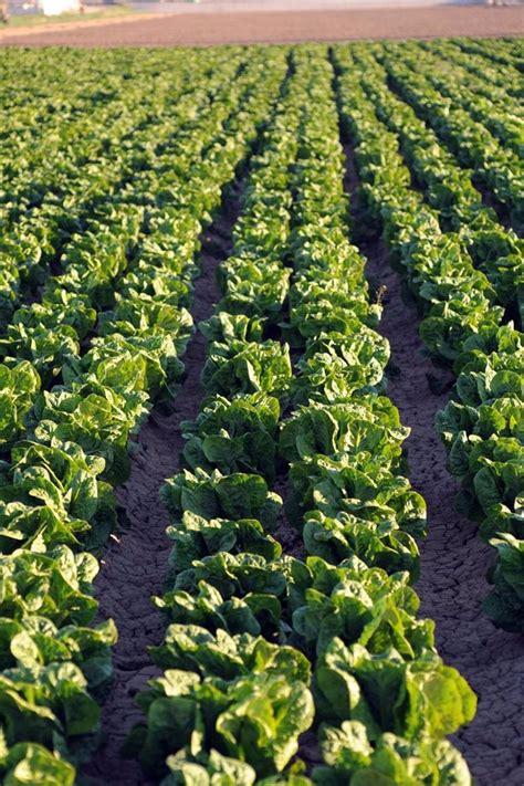 Agricultura realiza un informe sobre los daños en cultivos ...
