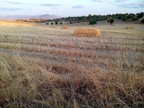 Agricultura temporal: características, ventajas y ...
