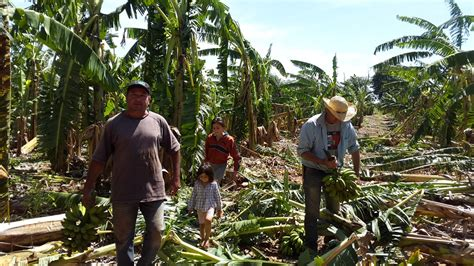 agricultura temporal   Wood Scribd Mexico