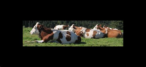 Agricultura y ganadería | Comunidad de Madrid