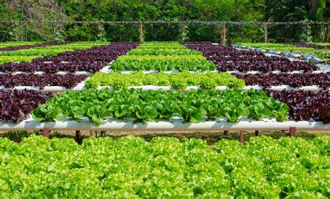 AgroA    La agricultura protegida, el futuro del campo ...