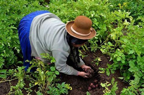 Alerta sobre cambio climático, agricultura y seguridad ...