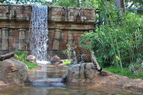 Alexandria Zoological Park  LA : Top Tips Before You Go ...