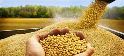 Algunas propiedades de la soja que deberías saber ...