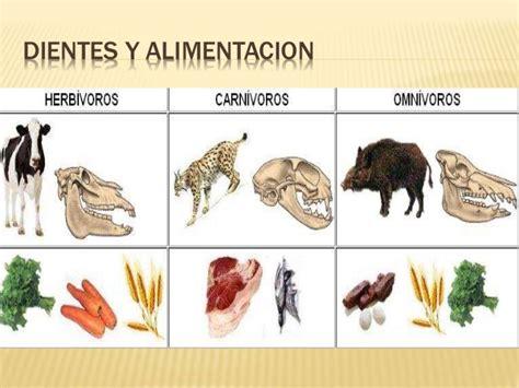 Alimentacion animales y plantas