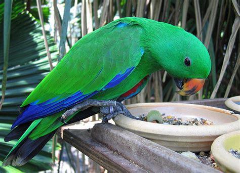 Alimentación de las Aves de Compañía   Infomascota
