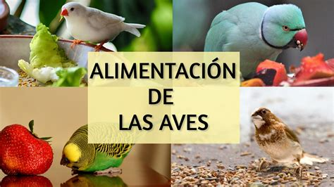Alimentación de las aves  GUÍA COMPLETA    AviarioJP