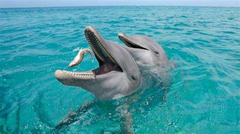 Alimentación de los delfines
