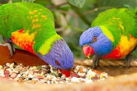 Alimentación inadecuada para las aves