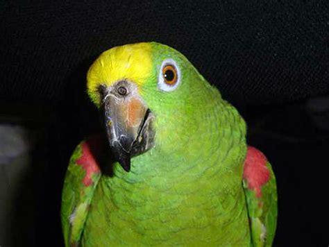 Alimentación y cuidado de las aves   Mascotas