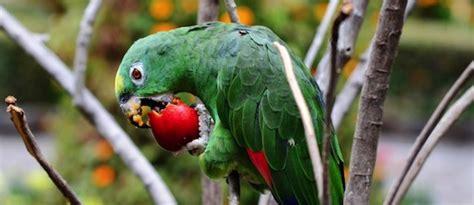alimento para aves