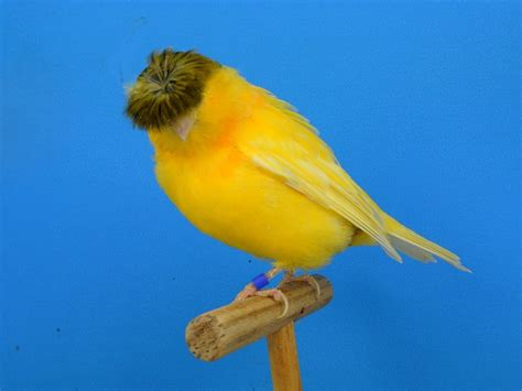 Alimento Para Canarios Ocell   $ 60.00 en Mercado Libre