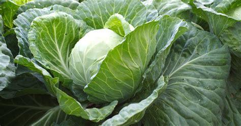 Alimentos para evitar los gases intestinales | eHow en Español