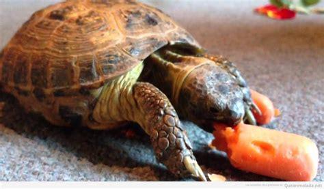 Alimentos para tortugas 4