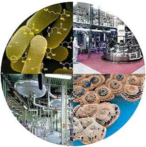 All About Biotechnology: Traditional Biotechnology Vs New ...
