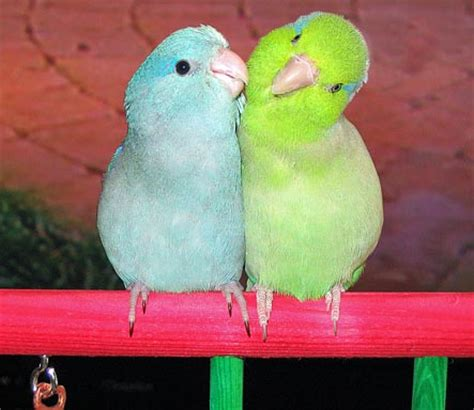 All About Birds: Types of Lovely Pet Birds as Your Home ...