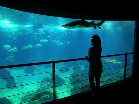 All About Rankings: Top 10 Largest Aquariums In The World