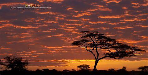 Amaneceres y atardeceres de África   fotografía de naturaleza