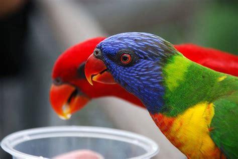 Amazing World & Fun: Beautiful Colorful Birds   Nature