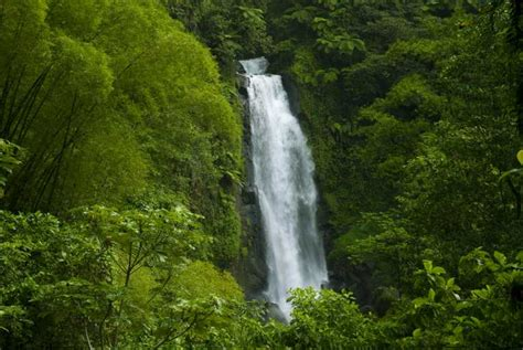 Amazon   Amazon Rainforest Photo  33125125    Fanpop