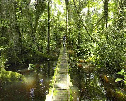 Amazon Jungle Boardwalk   Amazon Rain Forest Tour
