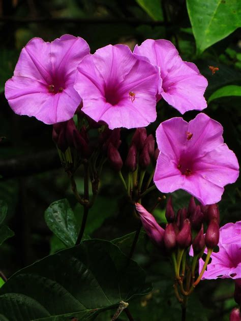 Amazon Rainforest Plants and Flowers | are fascinating ...