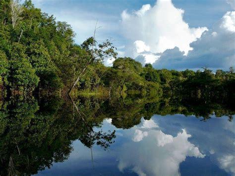 Amazon Rainforest Wallpapers   Wallpaper Cave