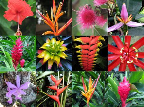 Amazonas | En esta página podras ver flora y fauna del ...
