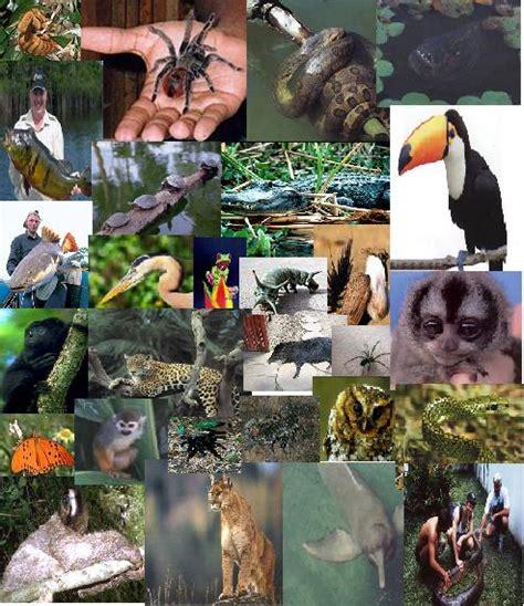 Amazonas: Fauna y Flora