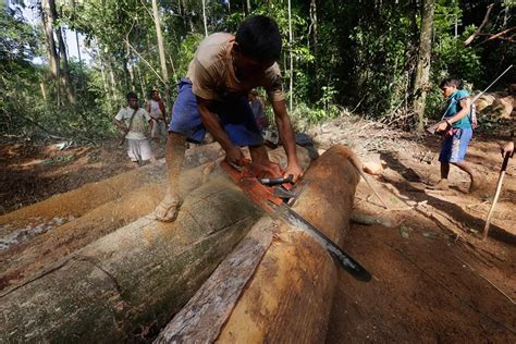 Amazonian tribe is fighting against illegal loggers